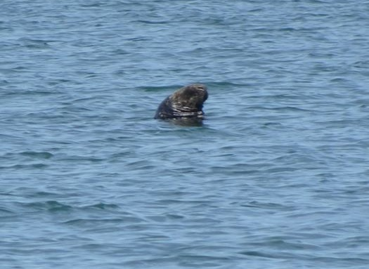 Seal spotting off Blackpool